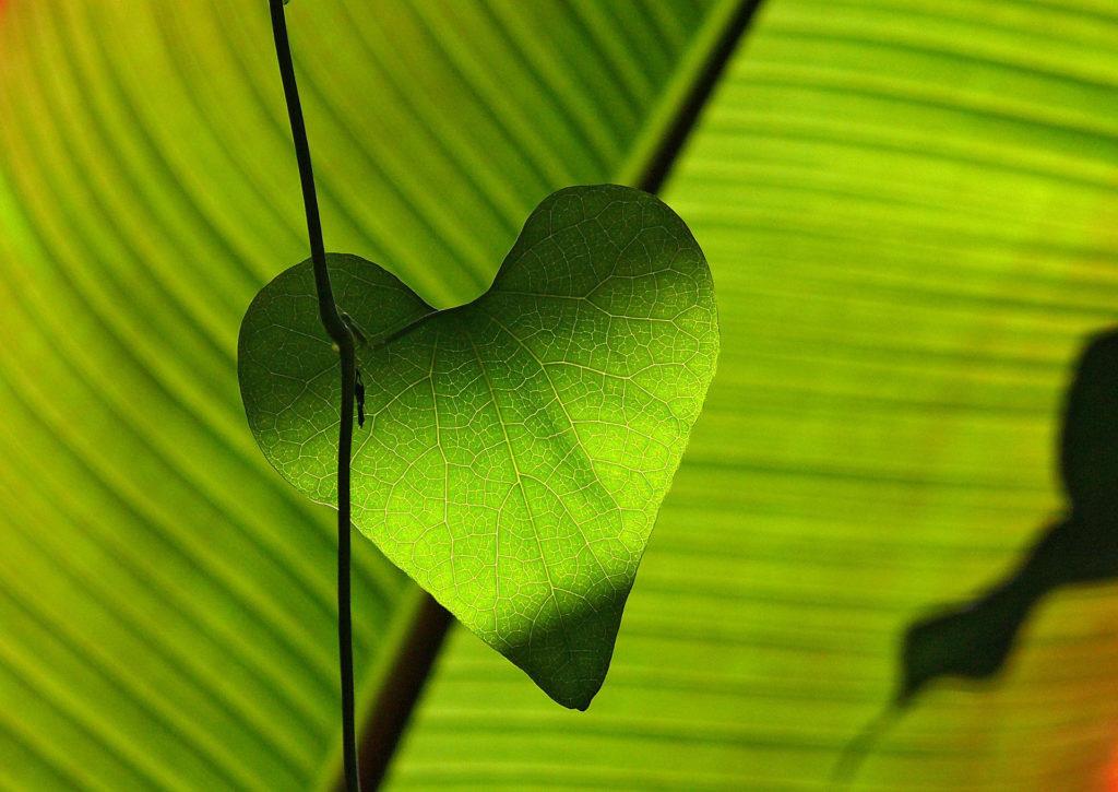 Koherencja serca -notatki z romozwy
